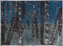 Birch woods by Edgeworth.