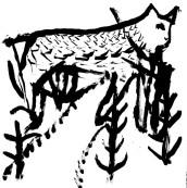 cat_in_the_woods_700
